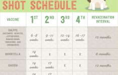 Keep Your Puppy Healthy With This Vaccination Schedule
